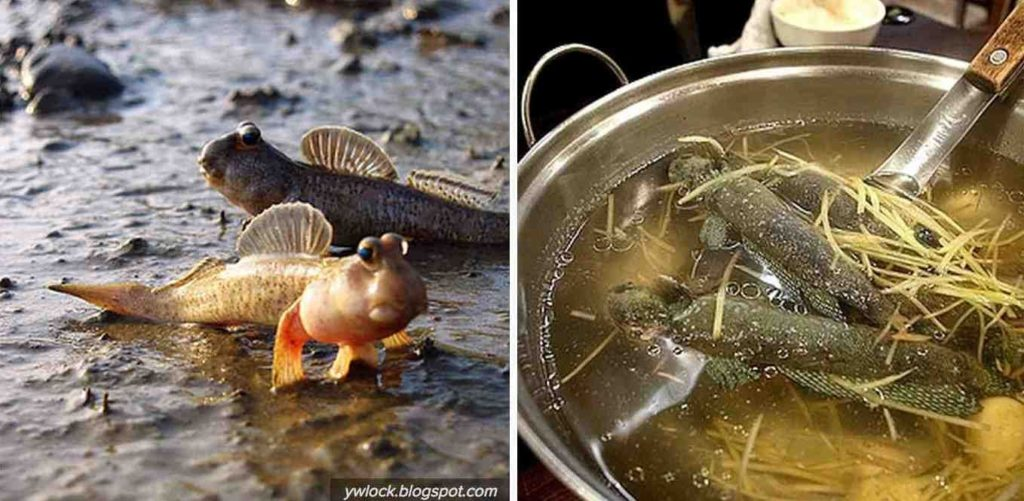 """Du Lịch VIỆT PROMOTION: Cá Thòi Lòi – Loài """"Quái Thú Xấu Lạ"""" Mà Ngon!"""